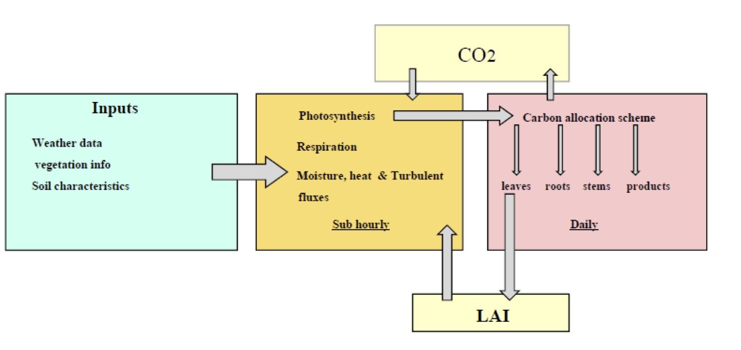 Intercropping diagram